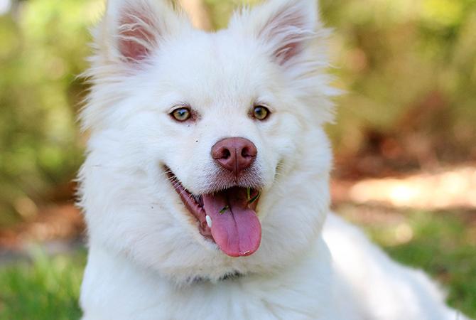 productos-para-animales-menores-caninos