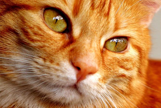 productos-para-animales-menores-felinos